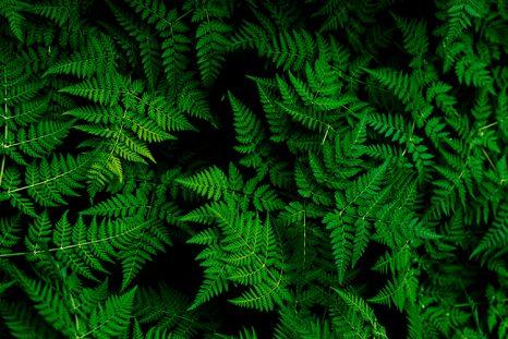 Du vert et de ses nuances