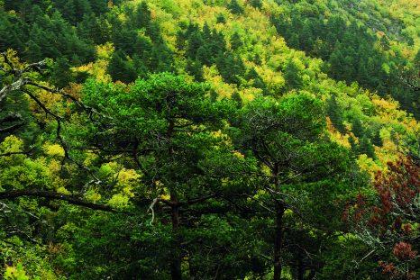 Dans le Vercors, l'ASPAS rachetait en 2019 cette forêt.